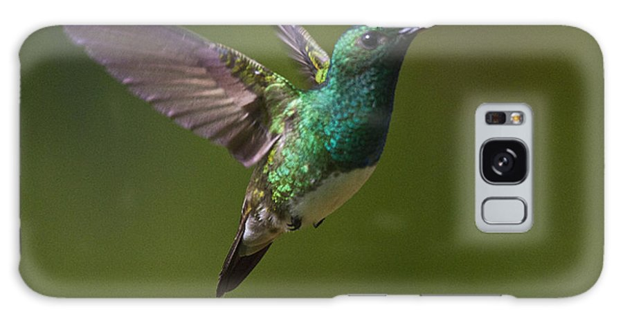 Bird Galaxy S8 Case featuring the photograph Snowy-bellied Hummingbird by Heiko Koehrer-Wagner