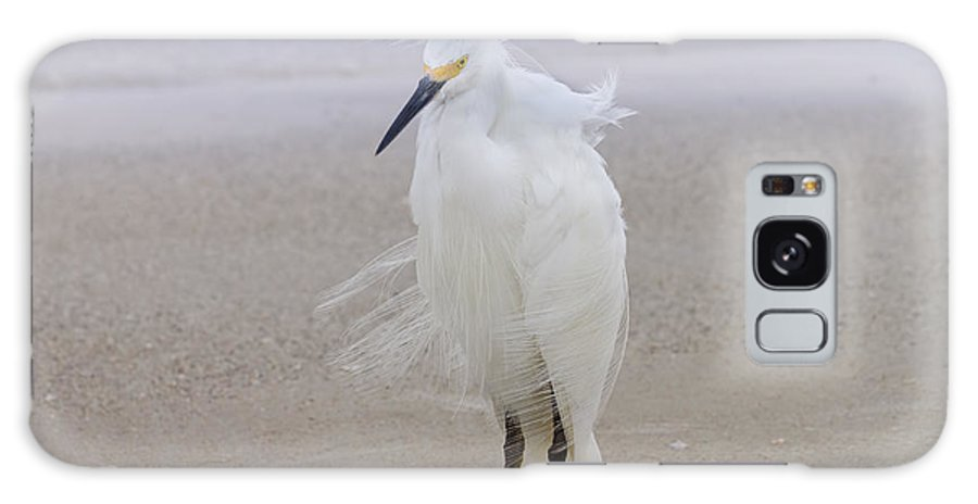 Egret Galaxy S8 Case featuring the photograph Snowy Egret At The Beach by Kim Hojnacki