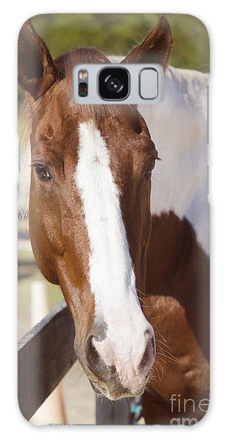 Horse Galaxy S8 Case featuring the photograph Sonny by Nicole Rodriguez