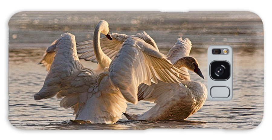 Trumpeter Swans Galaxy S8 Case featuring the photograph Spring Rites by Theo O'Connor