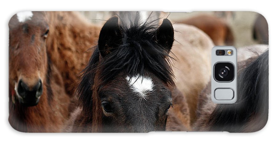 Wild Horses Galaxy S8 Case featuring the photograph Stampede by Steve McKinzie