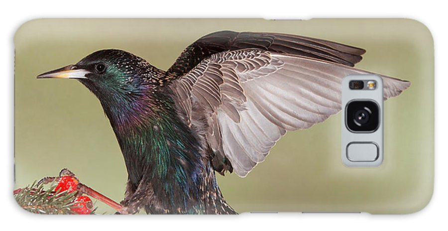 Nature Galaxy S8 Case featuring the photograph Stanley The Starling by Gerry Sibell