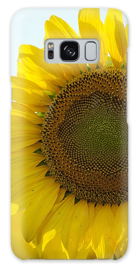 Sunflower Galaxy S8 Case featuring the photograph Sun Kissed by Debby Richards