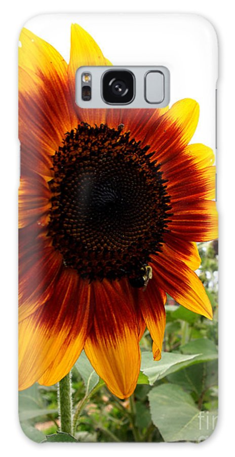 Sunflowers Galaxy S8 Case featuring the photograph Sunflower Beauty by Deborah Fay