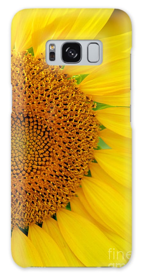 Clear Galaxy S8 Case featuring the photograph Sunflower Petals by Mark Dodd