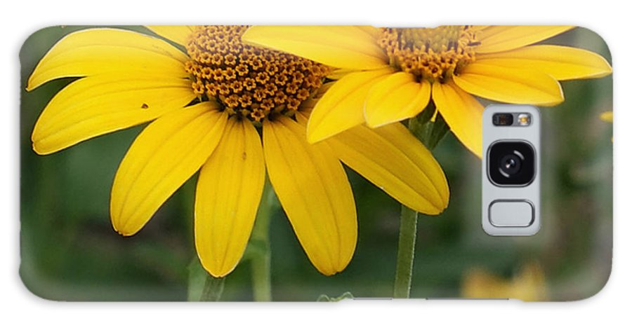 Sunflower Galaxy S8 Case featuring the photograph Sunflowers by Ernie Echols