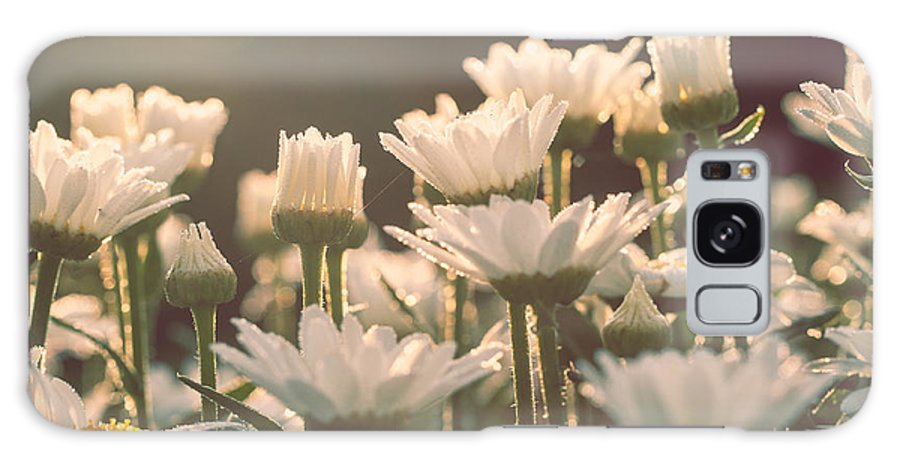 Daisies Galaxy S8 Case featuring the photograph Sunshine Daisies by Mary Smyth