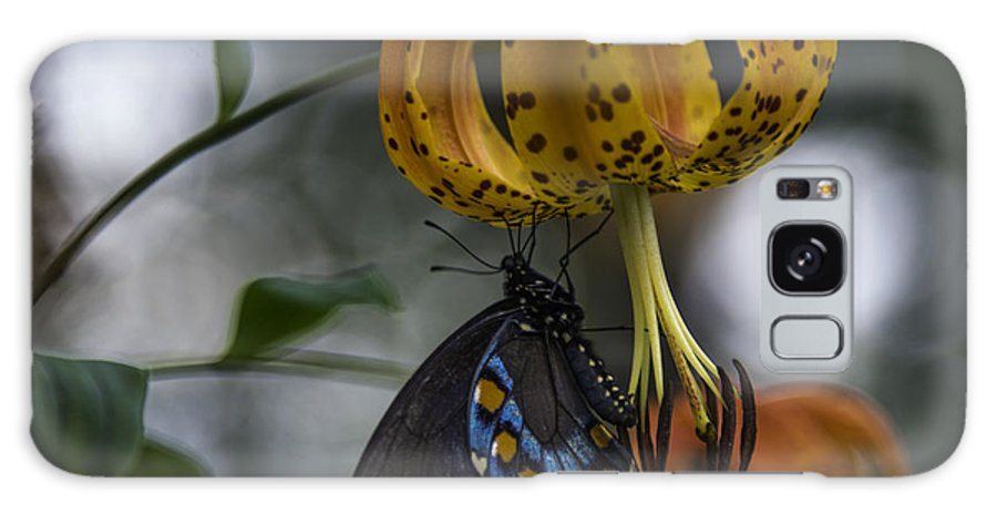 Appalachian Galaxy S8 Case featuring the photograph Swallowtail On Turks Cap by Donald Brown