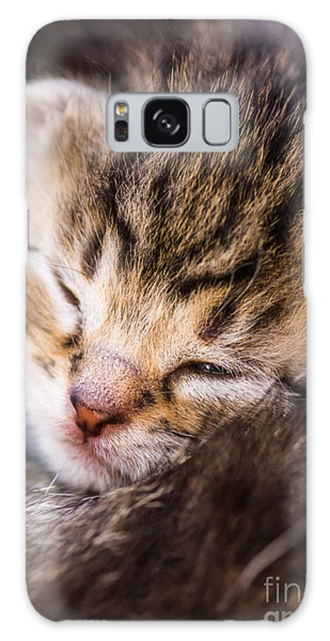 Young Galaxy S8 Case featuring the photograph Sweet Small Kitten by Juergen Ritterbach