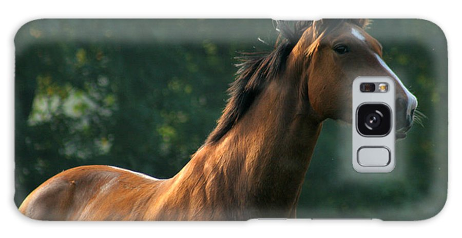 Horse Galaxy S8 Case featuring the photograph The Observer by Angel Ciesniarska