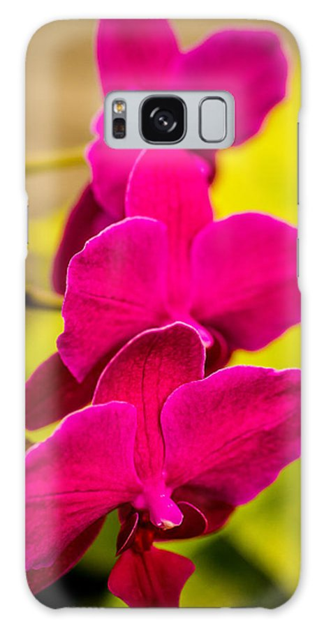 Delicate Galaxy S8 Case featuring the photograph Tropical Orchid Flower Blossoms by Teri Virbickis