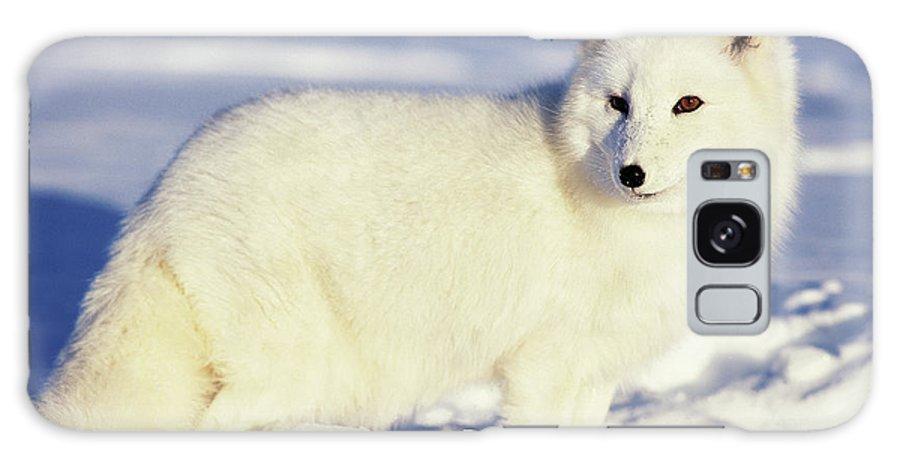 Alaska Galaxy Case featuring the photograph Usa, Alaska Arctic Fox In Winter Coat by Jaynes Gallery