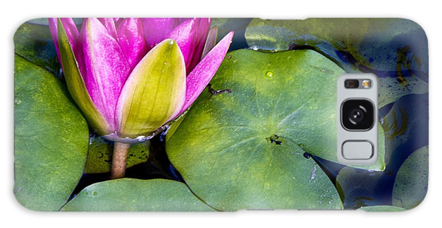 Macro Galaxy S8 Case featuring the photograph Water Lily by Barbara Smith