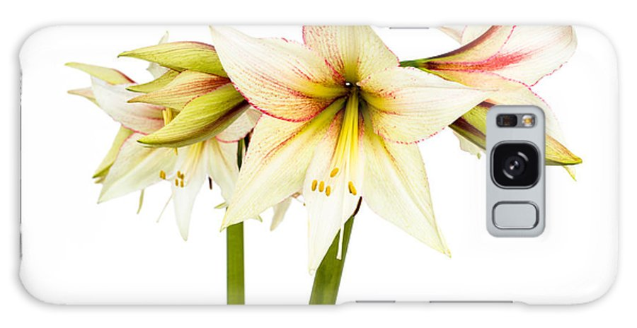 Colorful Galaxy S8 Case featuring the photograph White Amaryllis Flower by Frank Gaertner
