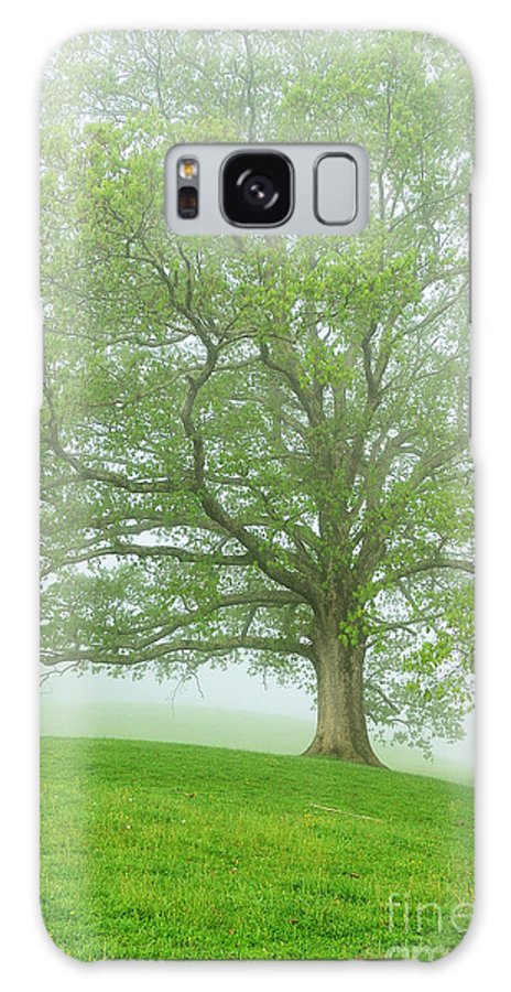 West Virginia Galaxy S8 Case featuring the photograph White Oak Tree In Fog by Thomas R Fletcher