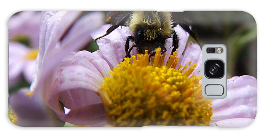 Bee Galaxy S8 Case featuring the photograph Bed Head by Cynthia Syracuse