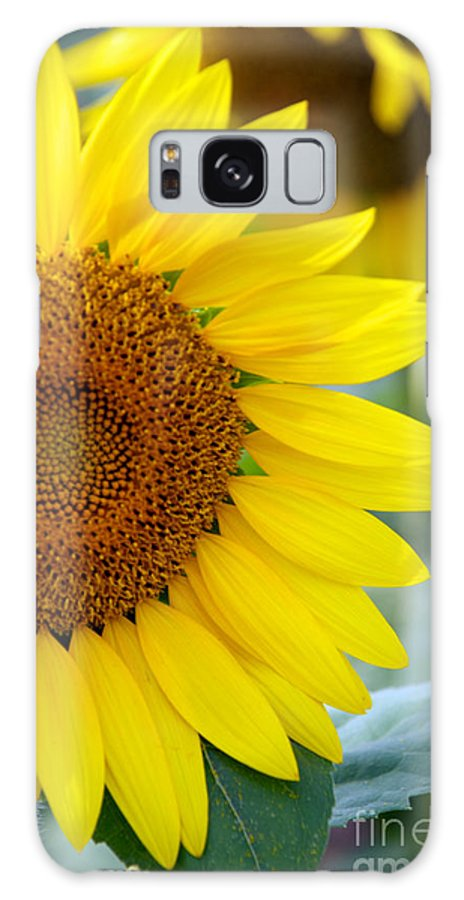Clear Galaxy S8 Case featuring the photograph Sunflower by Mark Dodd