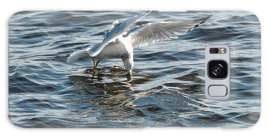 Sea Gull Galaxy S8 Case featuring the photograph I See You by Robert Smice