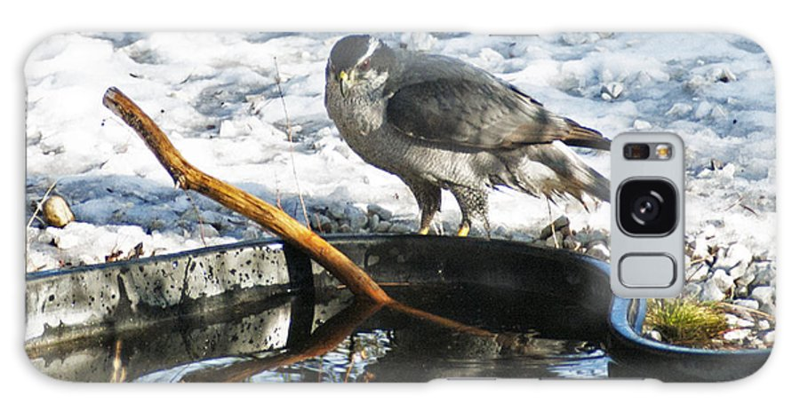 Accipiter Gentilis Galaxy S8 Case featuring the photograph 1145p Northern Goshawk by NightVisions