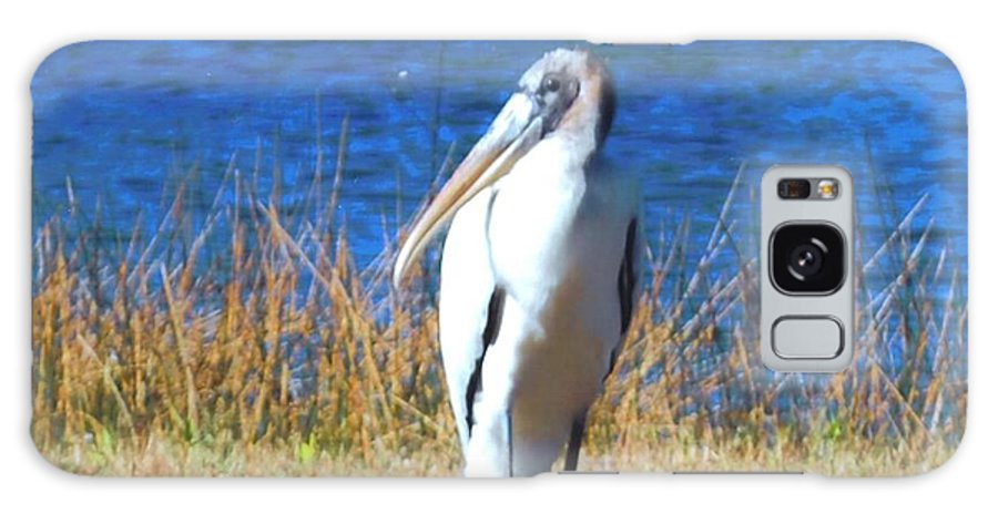 Resting At Lakes Park In Ft.myers Galaxy S8 Case featuring the photograph Wood Stork by Robert Floyd