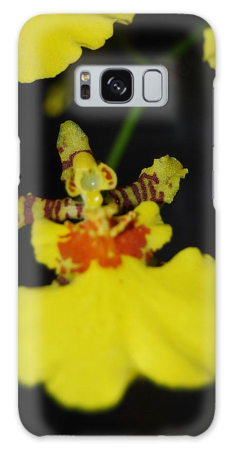 Dancing Lady Galaxy S8 Case featuring the photograph Orchid by Robert Floyd