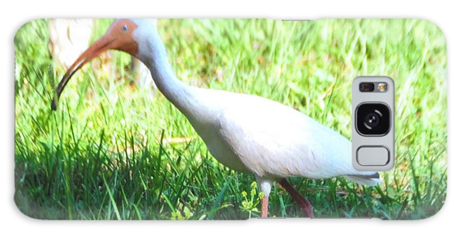 Feeding In My Backyard Galaxy S8 Case featuring the photograph White Ibis by Robert Floyd