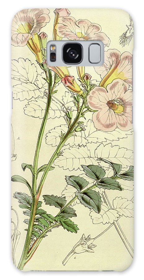 Botanical Galaxy S8 Case featuring the drawing Botanical Print By Walter Hood Fitch 1817 – 1892 by Quint Lox