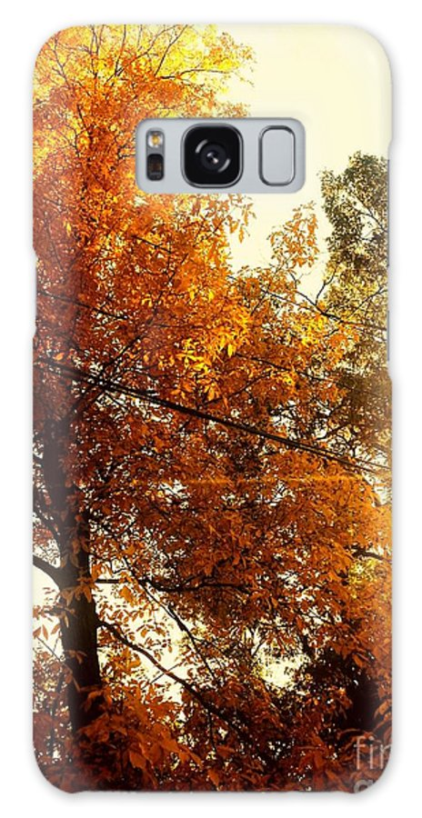 Fall Season. Beautiful Day. Sunset. Yellow Leave. Rose Wang Art. Rose Wang Image. Custome Order. Greeting Cards. Women Art. Galaxy S8 Case featuring the photograph Beautiful Fall Season by Rose Wang