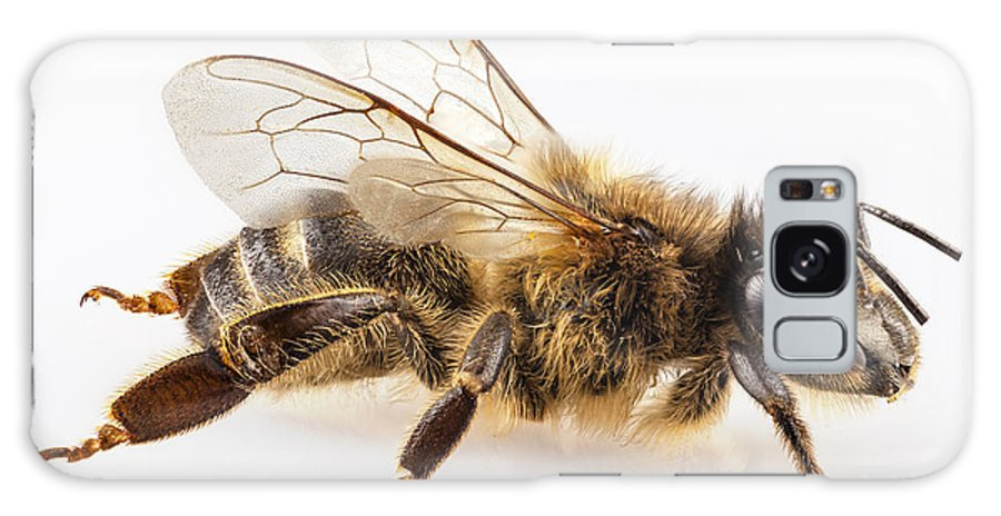 Antenna Galaxy S8 Case featuring the photograph Bee Species Apis Mellifera Common Name Western Honey Bee Or Euro by Pablo Romero
