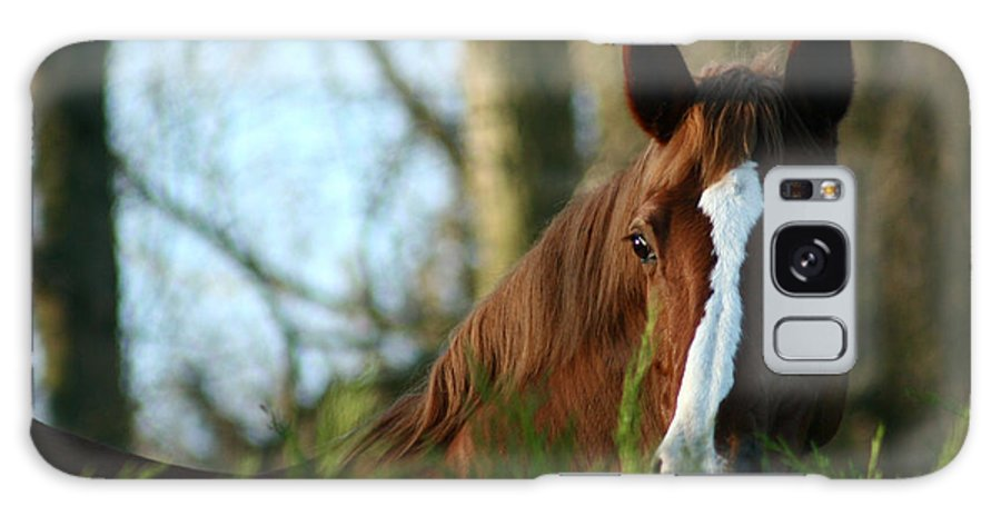 Chestnut Horse Galaxy S8 Case featuring the photograph Behind The Fence by Angel Ciesniarska