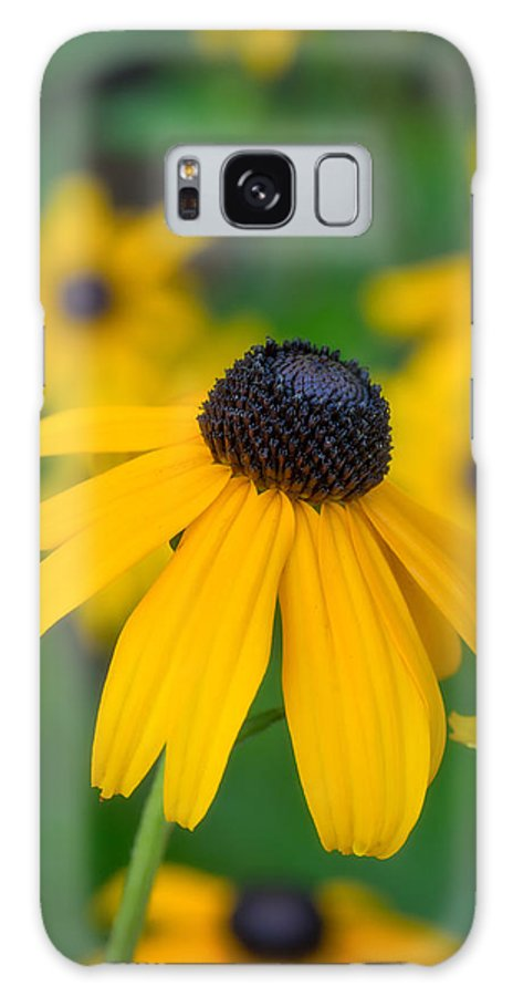 Blackeyed Susan Galaxy S8 Case featuring the photograph Blackeyed Susan by David Kay
