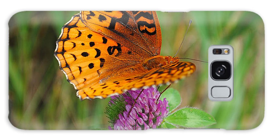 Butterfly Galaxy S8 Case featuring the photograph Butterfly by David Hart