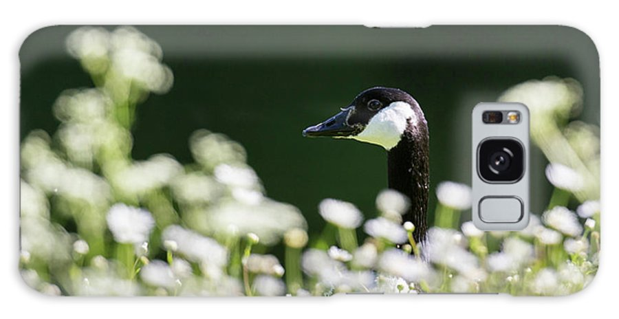 Bavaria Galaxy S8 Case featuring the photograph Canada Goose (branta Canadensis by Martin Zwick