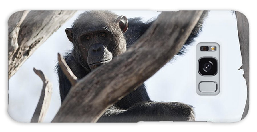 Chimpanzee Galaxy S8 Case featuring the photograph Chimpanzee by Brandon Alms