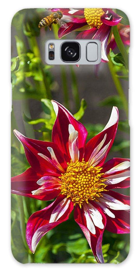 Christmas Star Dahlia Galaxy S8 Case featuring the photograph Christmas Star Dahlia And Bee by Thomas J Rhodes