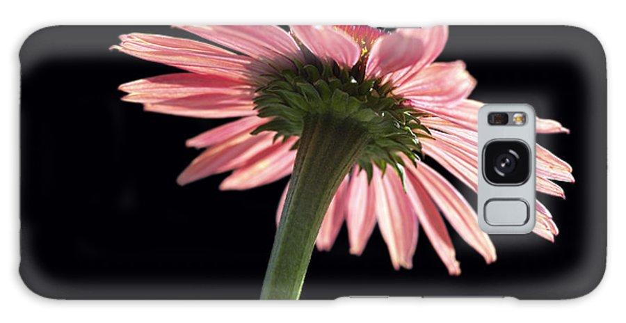 Echinacea Galaxy Case featuring the photograph Coneflower by Tony Cordoza