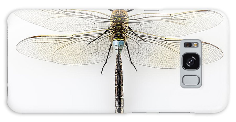 Water Galaxy S8 Case featuring the photograph Dragonfly Isolated by Pablo Romero