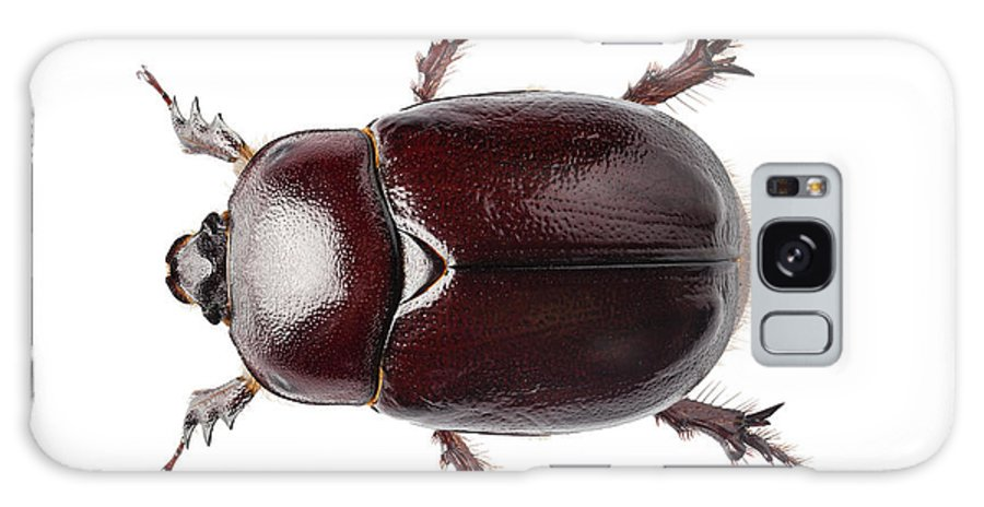 Animal Galaxy S8 Case featuring the photograph European Rhinoceros Beetle Female by Pablo Romero