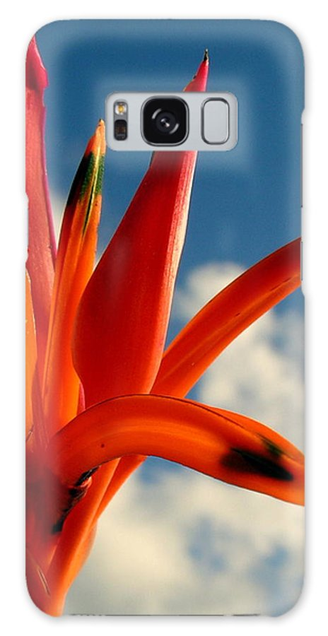 Flower Galaxy S8 Case featuring the photograph Flower by Dave Wangsness
