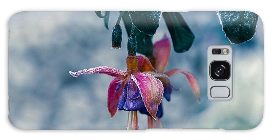 Cold Galaxy S8 Case featuring the photograph Frozen Garden by Jacek Tomczak