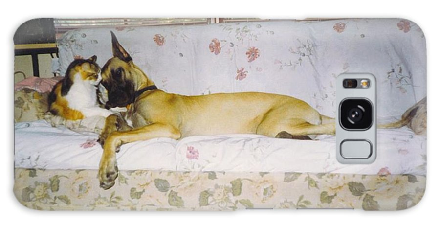 Buddy's Time Out. Galaxy S8 Case featuring the photograph Great Dane And Calico Cat by Robert Floyd