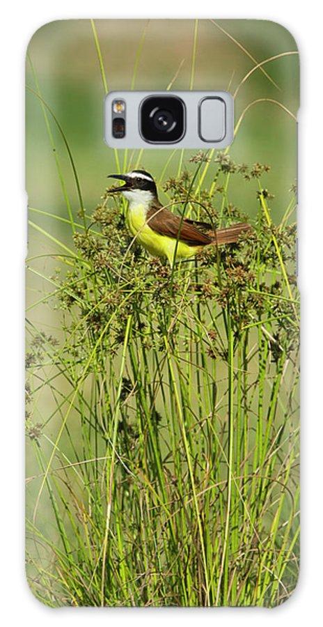 Bird Galaxy S8 Case featuring the photograph Great Kiskadee (pitangus Sulphuratus by Larry Ditto
