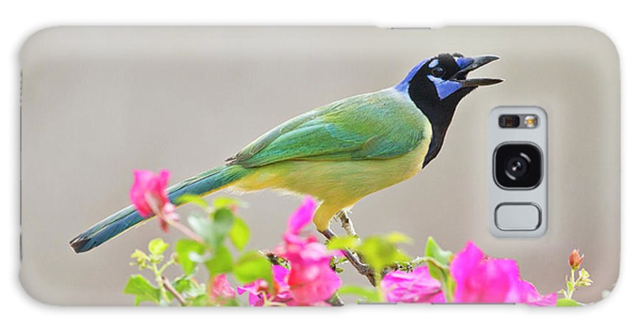 Bird Galaxy S8 Case featuring the photograph Green Jay (cyanocorax Yncas by Larry Ditto