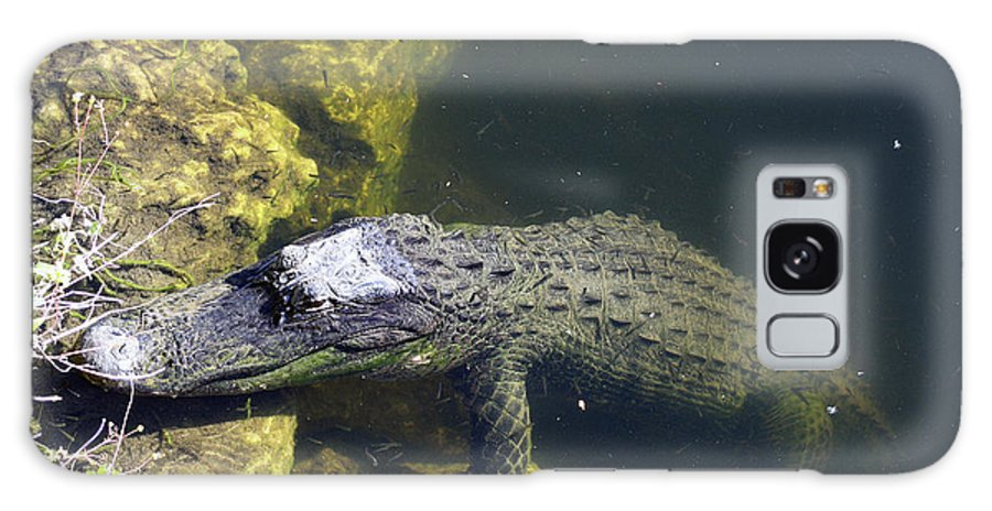 Alligator Galaxy S8 Case featuring the photograph Hang Around by Christiane Schulze Art And Photography