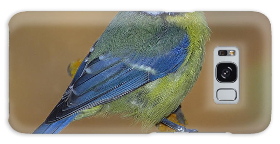 Birds Galaxy S8 Case featuring the photograph Herrerillo Blue Tit by Guido Montanes Castillo