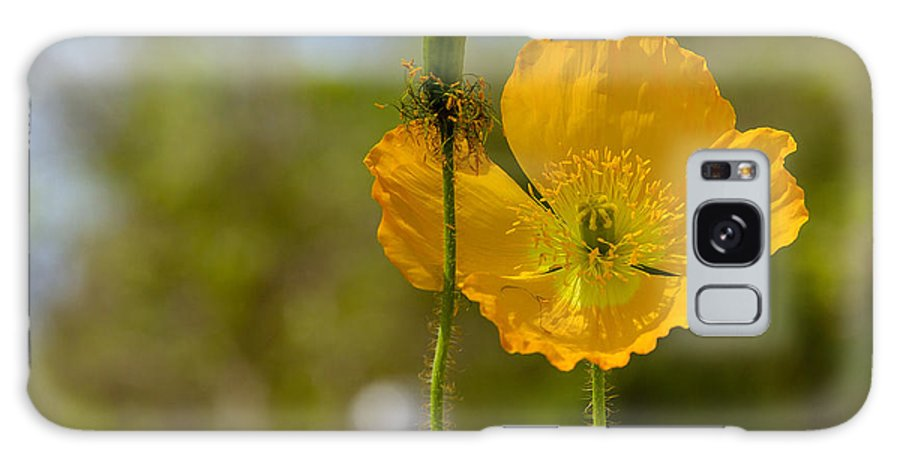 Flowers Galaxy S8 Case featuring the photograph Iceland Poppy by Renata Luisa Sdao