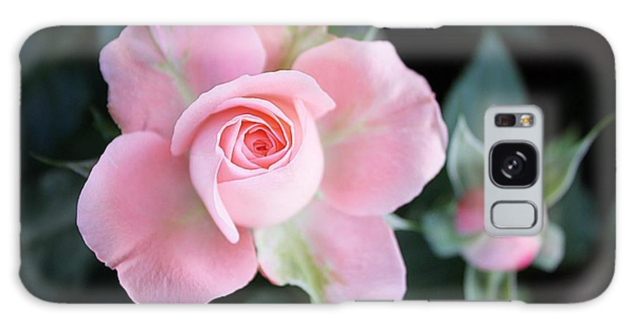 Rose Galaxy S8 Case featuring the photograph Miniature Pink Roses by Sharon Johnston