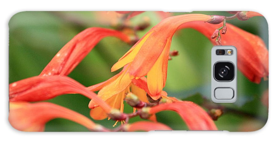 Montbretia Galaxy S8 Case featuring the photograph Montbretia by Kevin F Cook