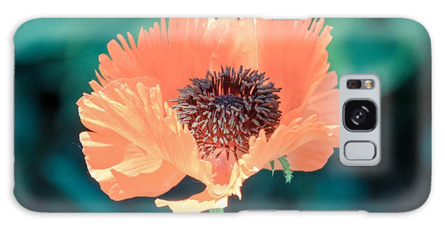 Rochester Galaxy S8 Case featuring the photograph Orange Poppy by Meegan Streeter