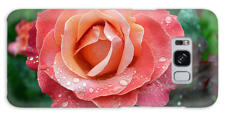 Flowers Galaxy S8 Case featuring the photograph Orange Rose by Ti Oakva